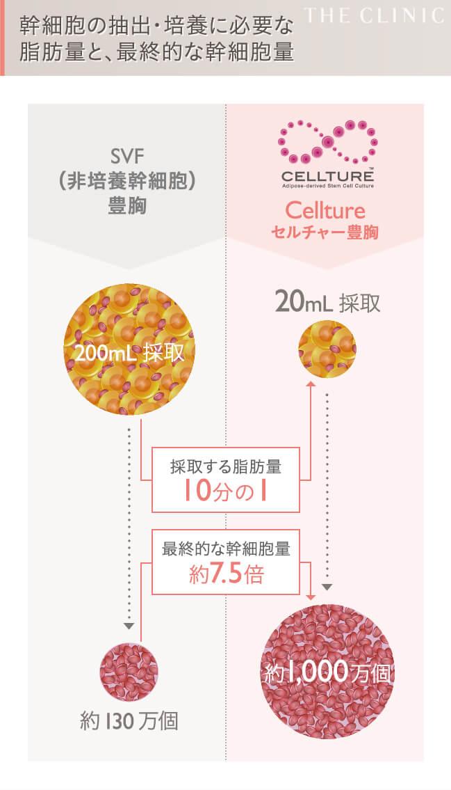 セルチャー豊胸とセリューション豊胸の幹細胞数の違い